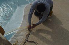Pool Deck Repair